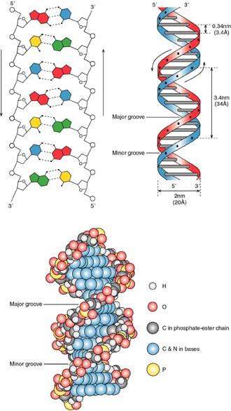 The Double Helix Analysis